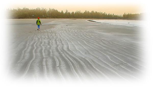Chestermans Beach Lorie